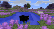 One of the non-vanilla cow breeds going for a swim.